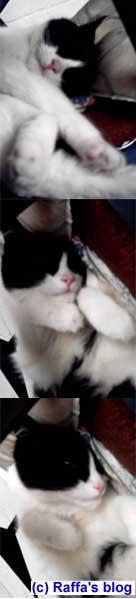 Ze cat
